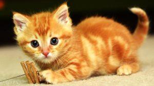 Mơ thấy mèo đánh con gì ? Có phải điềm lành hay điềm dữ ?